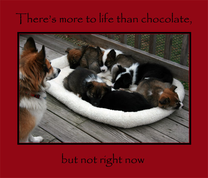 There's more to life than chocolate, but not right now.