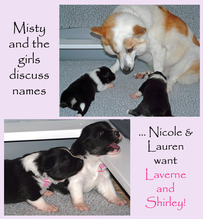 Misty and the pupstalking about possible names
