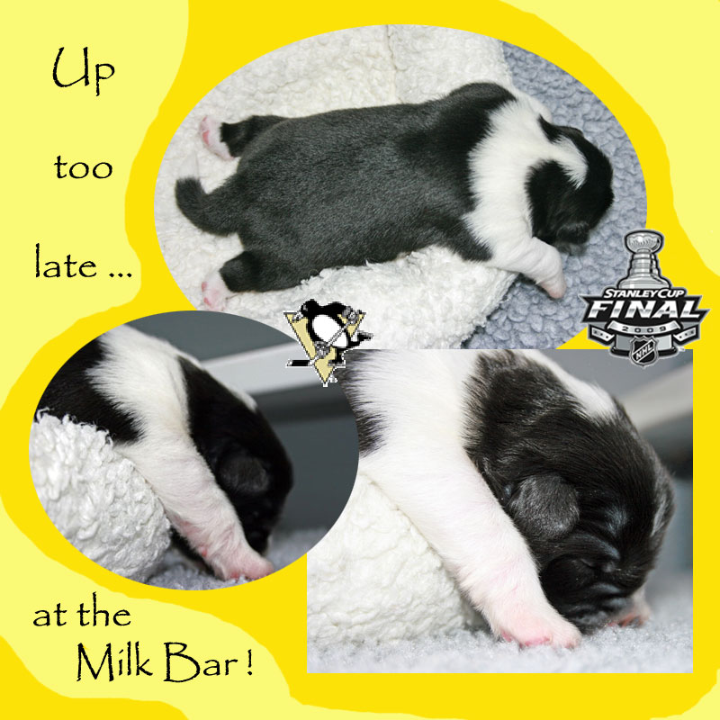 Up to late at the Milk Bar